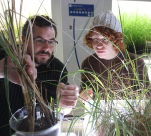 IIHR graduate students Aaron Gwinnup (left) and Elliott Beenk with samples of marsh grass from the Gulf Coast.