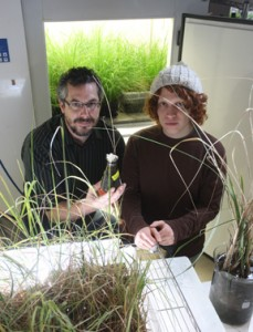 Graduate students Aaron Gwinnup (left) and Elliott Beenk hope to learn how coastal plants react to oil.
