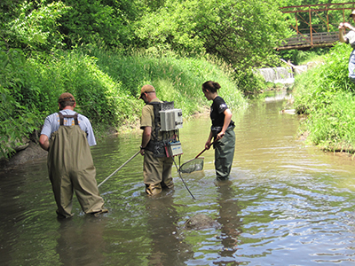 Students use electric current to momentarily stun fish and other organisms in the water. The number and variety of organisms caught can indicate the health of the stream.
