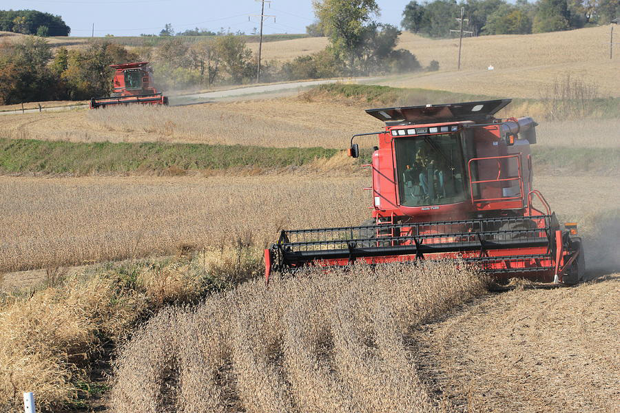 Harvesting soybeans. Photo by J. Laughlin.