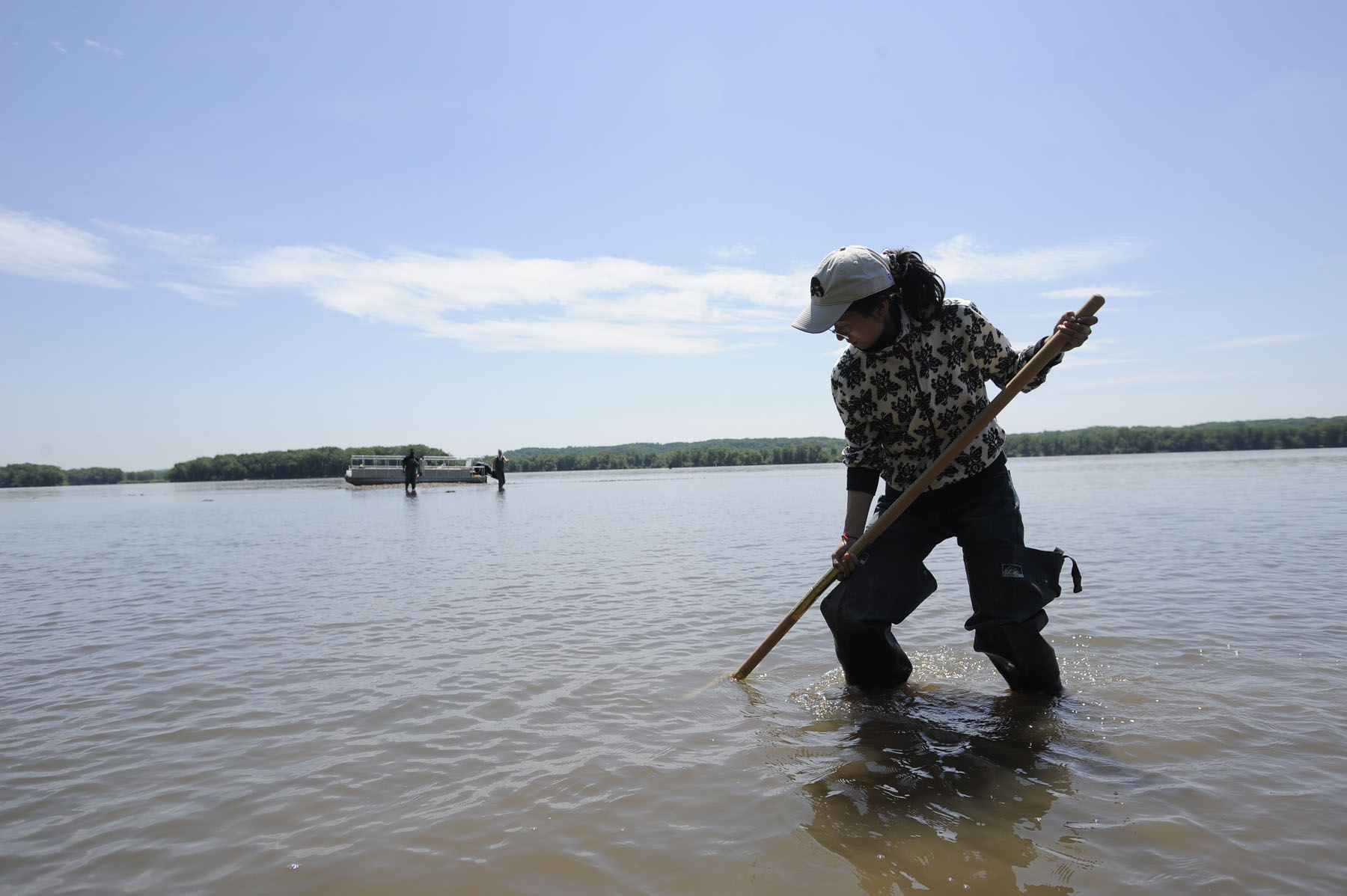 Visiting Scholar Peifang Wang digs for mussels in the Mississippi River.