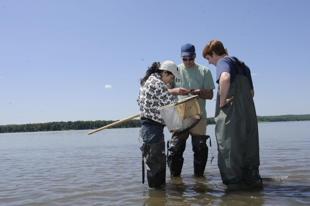 Three researchers in waders stand in shallow water in the Mississippi River looking at mussels caught in the river.