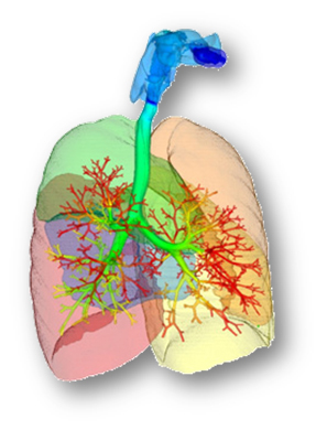 """Lin's digital lung project is a crucial piece of the human puzzle known as the """"Physiome Project."""""""