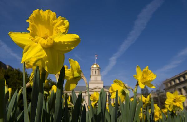 Old Capitol in springtime. (University Communication and Marketing Photography /University of Iowa)