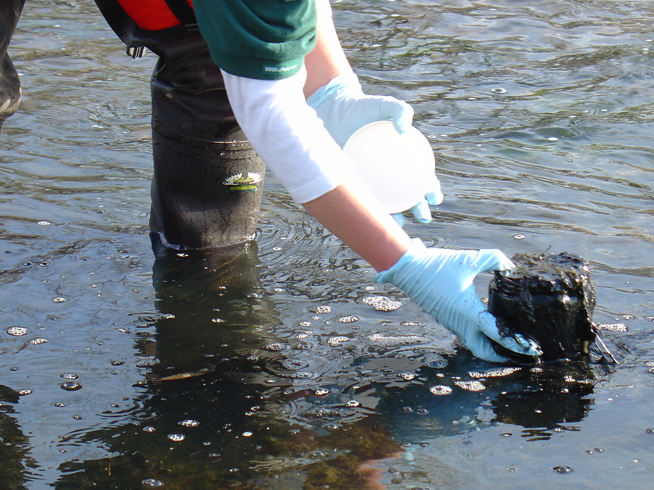 A gloved hand collects a water sample.