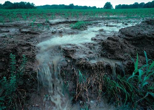 A muddy field.