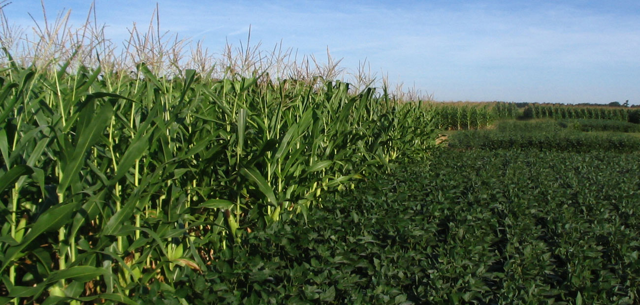 IIHR's water-quality monitoring network has generated interesting data that contradicts some widely-held beliefs regarding corn and soybeans and their impact on nitrate in Iowa's streams.