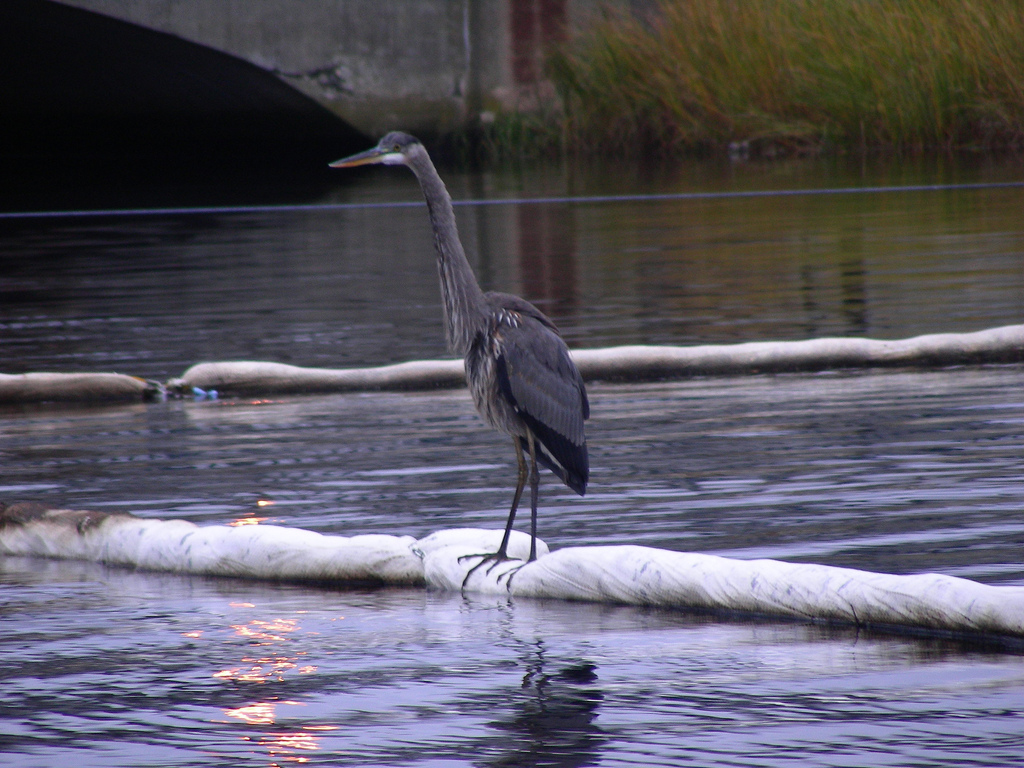 A casual observer checks out EPA clean-up progress at New Bedford Harbor superfund site. Photo courtesy of U.S. EPA