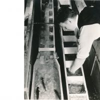 A black-and-white photo of a man leaning over early fish ladder models. Fish pictured in the lower left corner of the photo